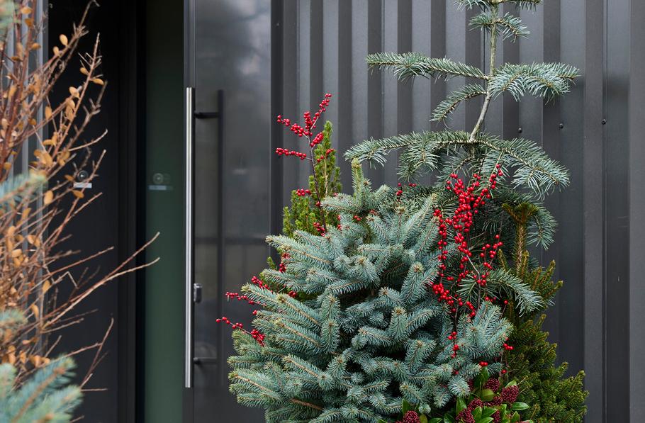 Aktuelle Gartenpflanze
