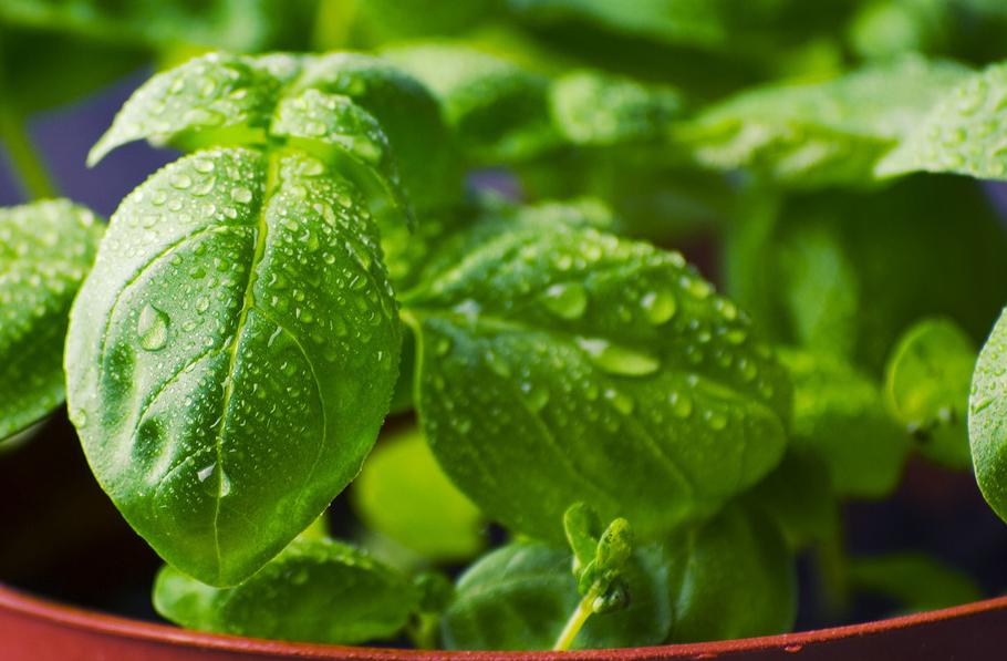 Selbermachen mit Biehl - Blumen und Gestaltung