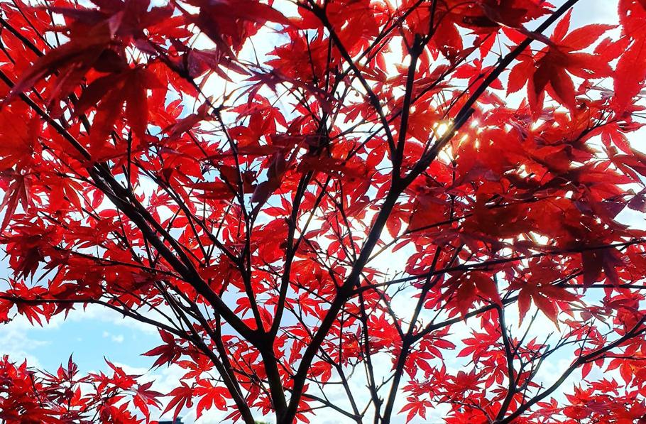 Herbstauszeit